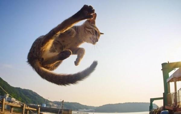 Японский фотограф показал котов-ниндзя
